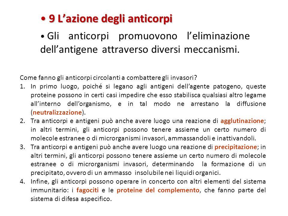 9 L'azione degli anticorpi 9 L'azione degli anticorpi Gli anticorpi promuovono l'eliminazione dell'antigene attraverso diversi meccanismi. Come fanno