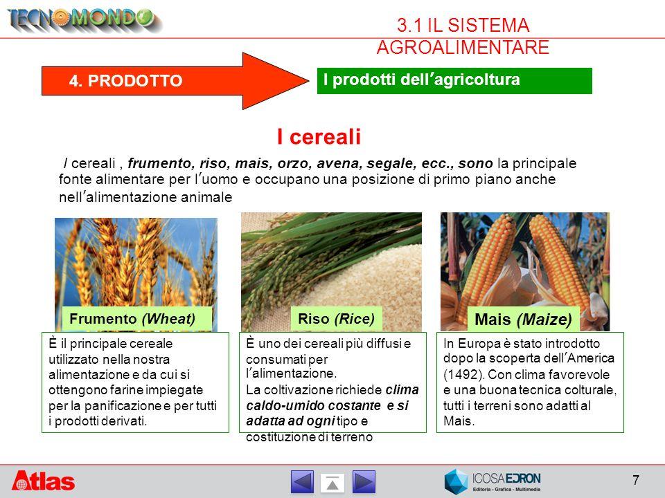 7 3.1 IL SISTEMA AGROALIMENTARE 4. PRODOTTO I prodotti dell'agricoltura I cereali I cereali, frumento, riso, mais, orzo, avena, segale, ecc., sono la