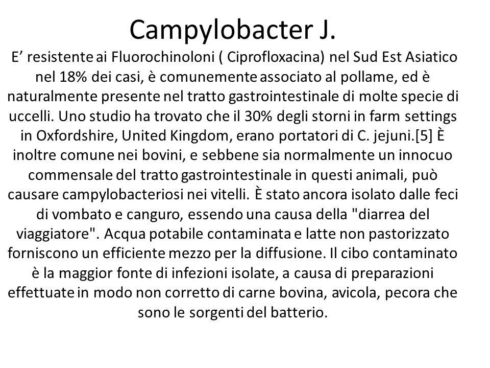 Campylobacter J. E' resistente ai Fluorochinoloni ( Ciprofloxacina) nel Sud Est Asiatico nel 18% dei casi, è comunemente associato al pollame, ed è na