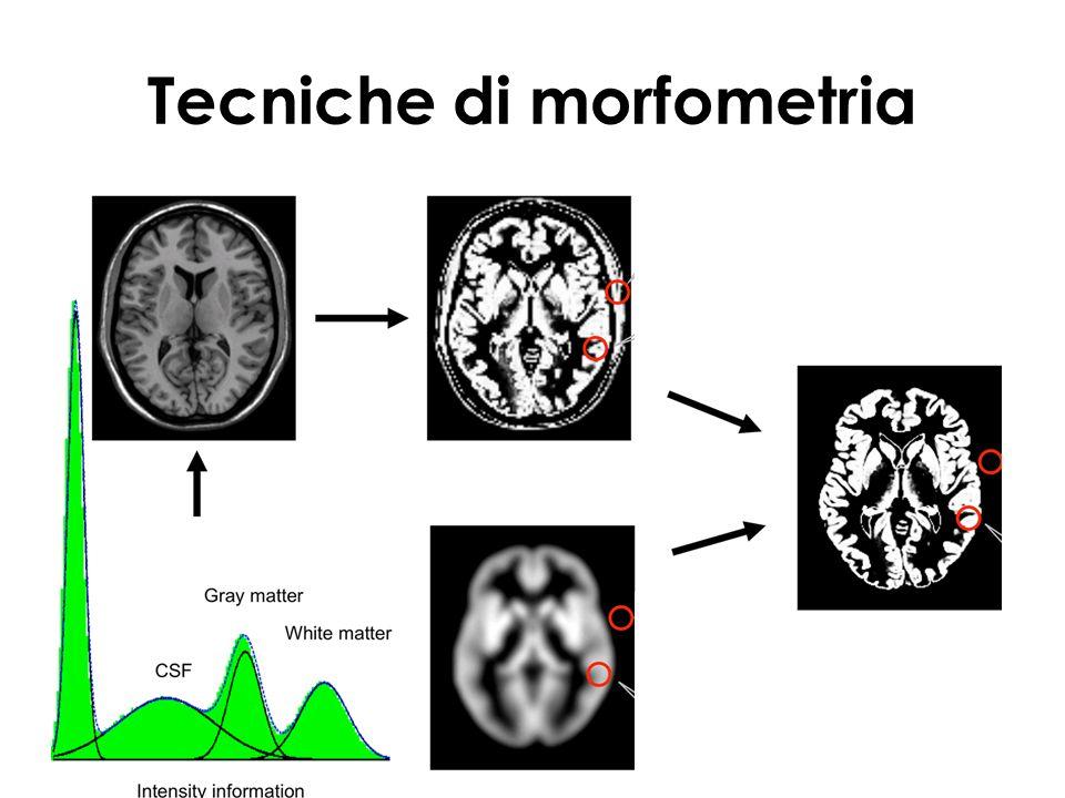 Tecniche di morfometria