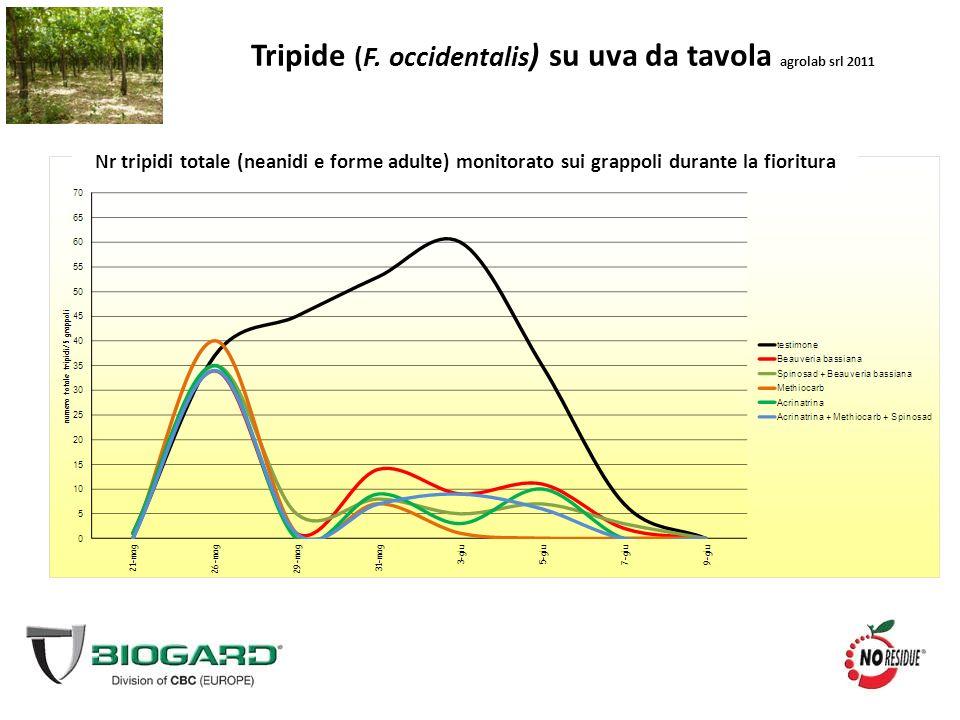 Tripide (F. occidentalis ) su uva da tavola agrolab srl 2011 Nr tripidi totale (neanidi e forme adulte) monitorato sui grappoli durante la fioritura