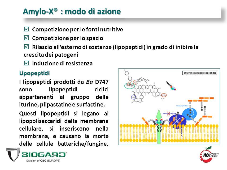  Competizione per le fonti nutritive  Competizione per lo spazio  Rilascio all'esterno di sostanze (lipopeptidi) in grado di inibire la crescita de
