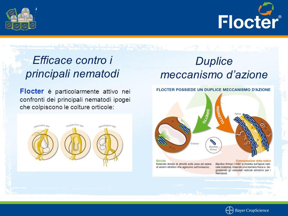 Efficace contro i principali nematodi Flocter è particolarmente attivo nei confronti dei principali nematodi ipogei che colpiscono le colture orticole