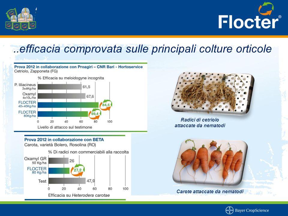 …andare oltre l'efficacia Bacillus firmus I-1582 ha mostrato una ottima capacità di colonizzazione del terreno.