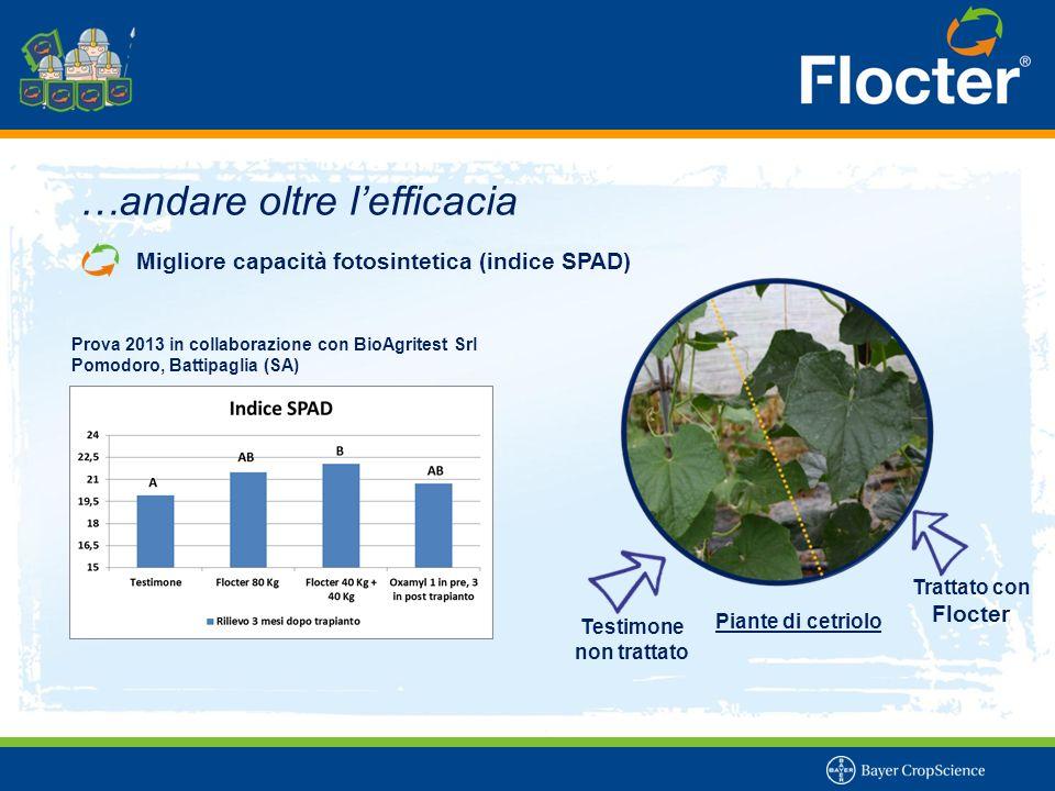 Testimone non trattato Trattato con Flocter …andare oltre l'efficacia Migliore capacità fotosintetica (indice SPAD) Piante di cetriolo Prova 2013 in c