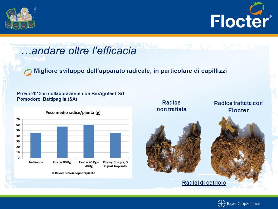…andare oltre l'efficacia Migliore sviluppo dell'apparato radicale, in particolare di capillizzi Radice trattata con Flocter Radice non trattata Radic