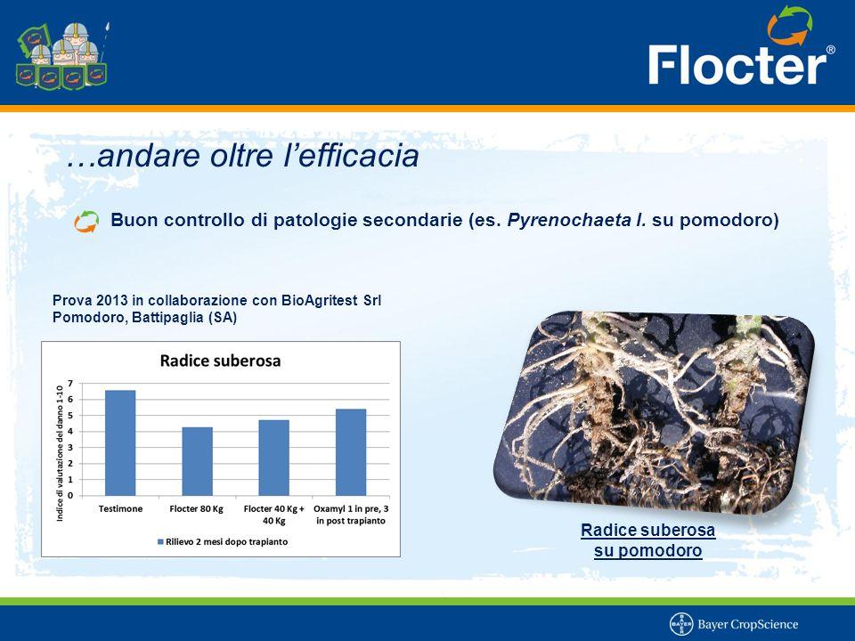 …andare oltre l'efficacia Buon controllo di patologie secondarie (es. Pyrenochaeta l. su pomodoro) Radice suberosa su pomodoro Prova 2013 in collabora