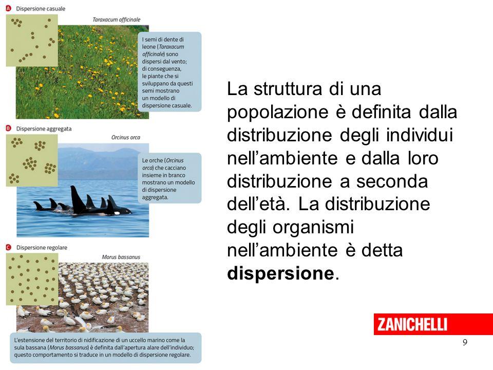 9 Sadava et al. La nuova biologia.blu © Zanichelli 2015 La struttura di una popolazione è definita dalla distribuzione degli individui nell'ambiente e