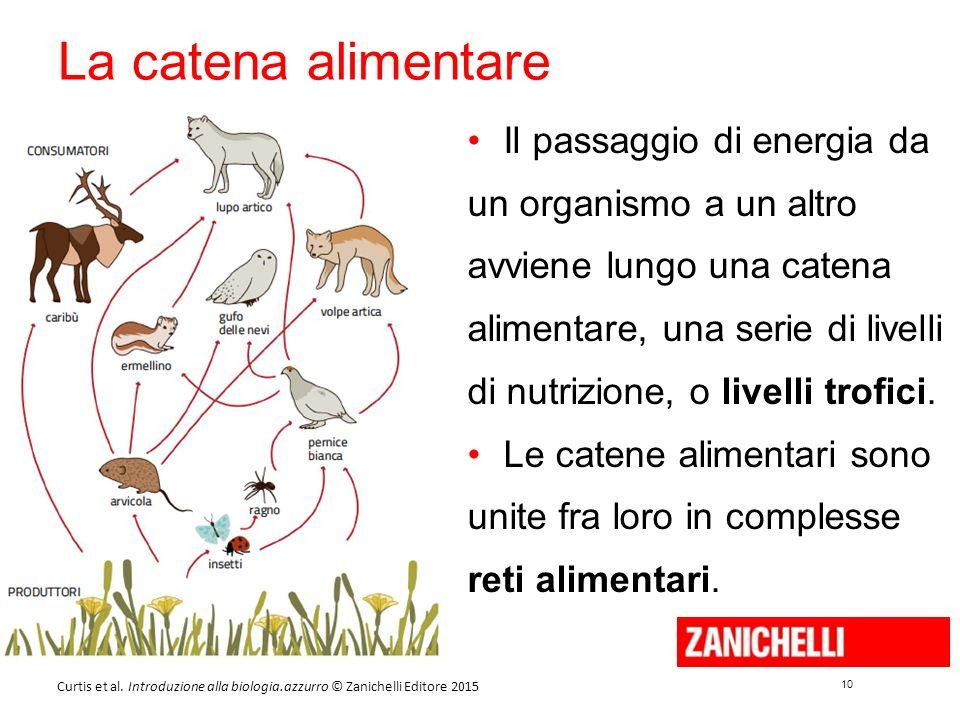 10 Curtis et al. Introduzione alla biologia.azzurro © Zanichelli Editore 2015 La catena alimentare Il passaggio di energia da un organismo a un altro