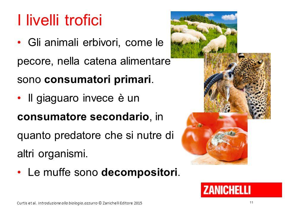 11 Curtis et al. Introduzione alla biologia.azzurro © Zanichelli Editore 2015 I livelli trofici Gli animali erbivori, come le pecore, nella catena ali