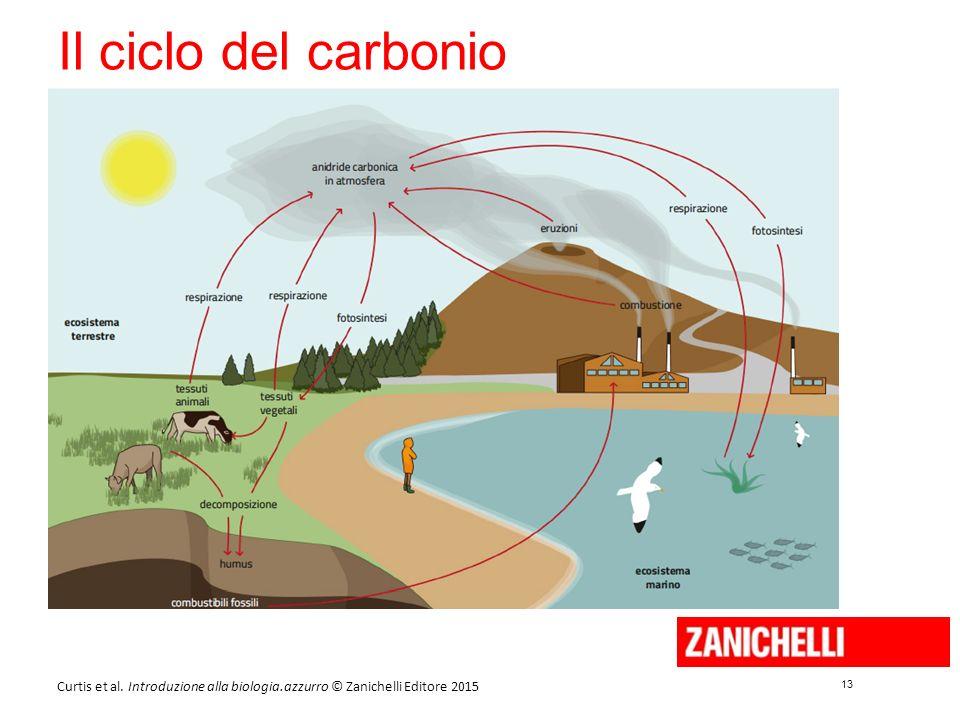 13 Curtis et al. Introduzione alla biologia.azzurro © Zanichelli Editore 2015 Il ciclo del carbonio