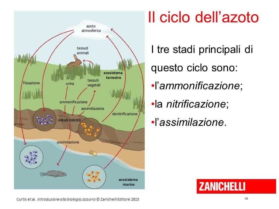 15 Curtis et al. Introduzione alla biologia.azzurro © Zanichelli Editore 2015 Il ciclo dell'azoto I tre stadi principali di questo ciclo sono: l'ammon
