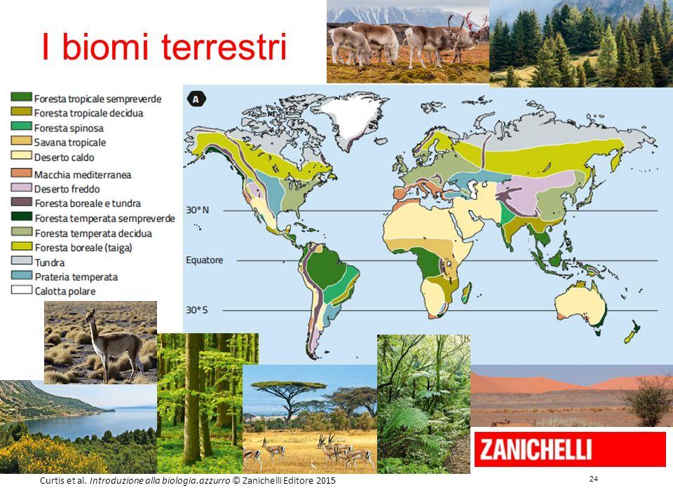 24 Curtis et al. Introduzione alla biologia.azzurro © Zanichelli Editore 2015 I biomi terrestri