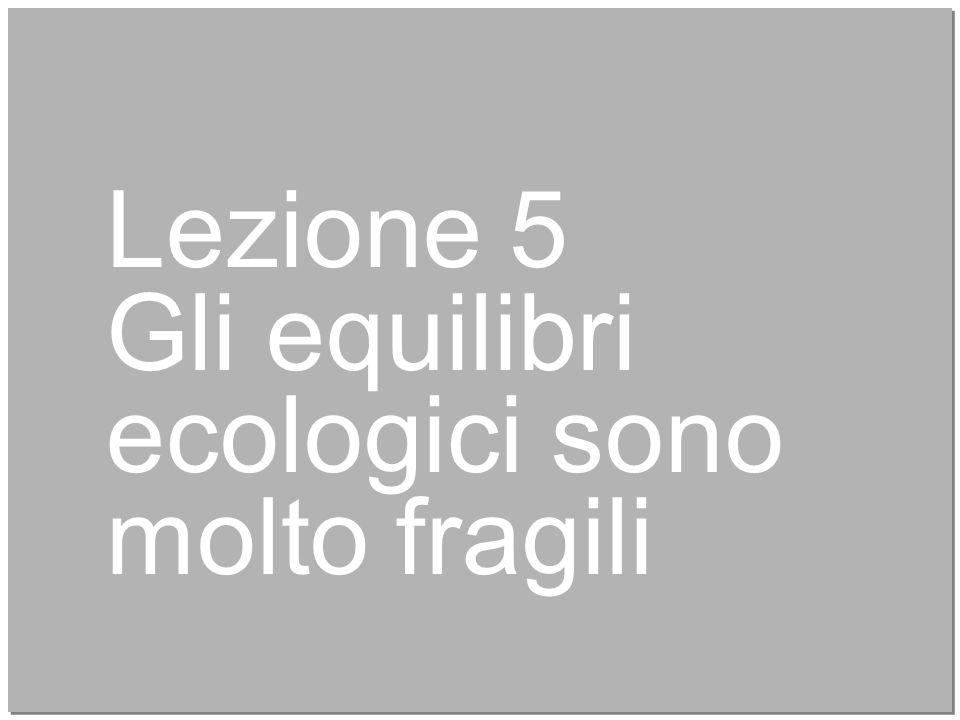 25 Lezione 5 Gli equilibri ecologici sono molto fragili