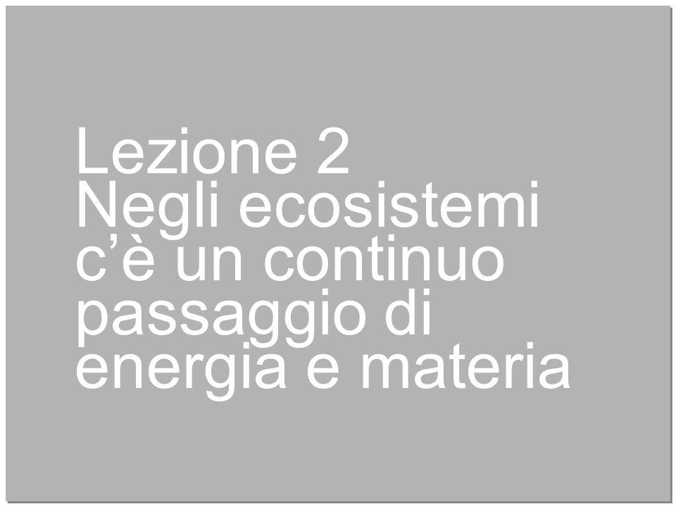 9 Lezione 2 Negli ecosistemi c'è un continuo passaggio di energia e materia