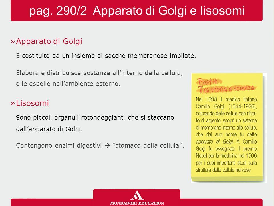 »Apparato di Golgi È costituito da un insieme di sacche membranose impilate. Elabora e distribuisce sostanze all'interno della cellula, o le espelle n