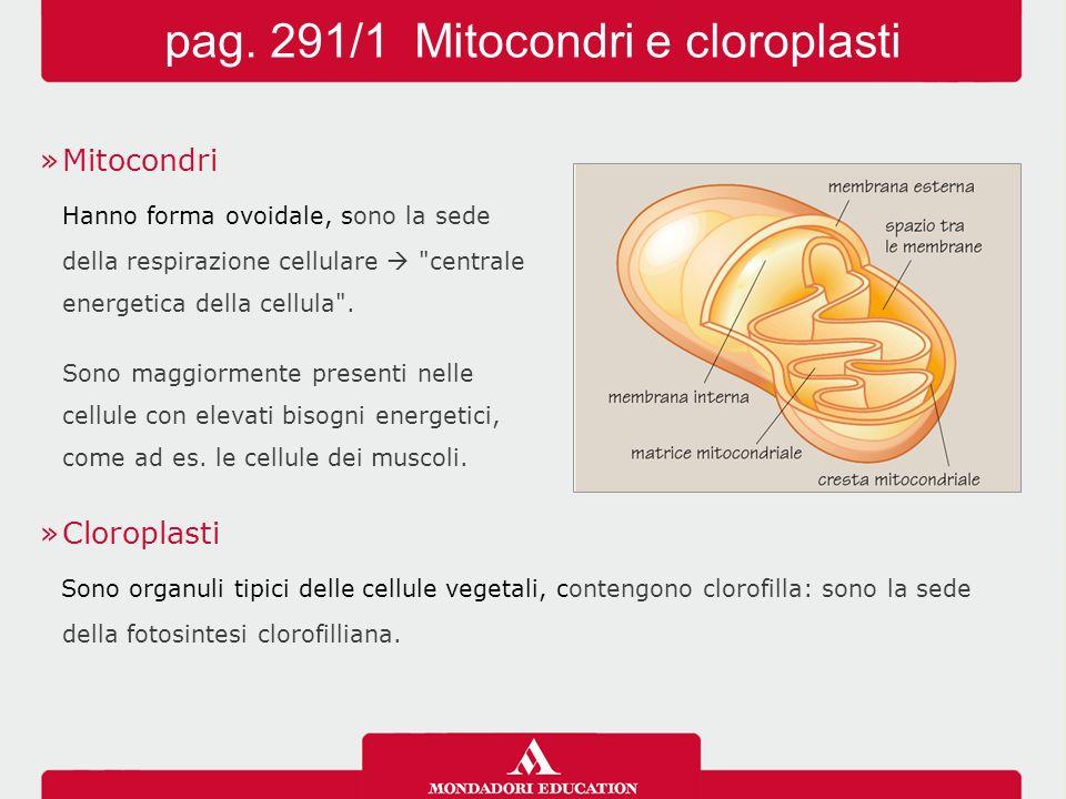 »Mitocondri Hanno forma ovoidale, sono la sede della respirazione cellulare 