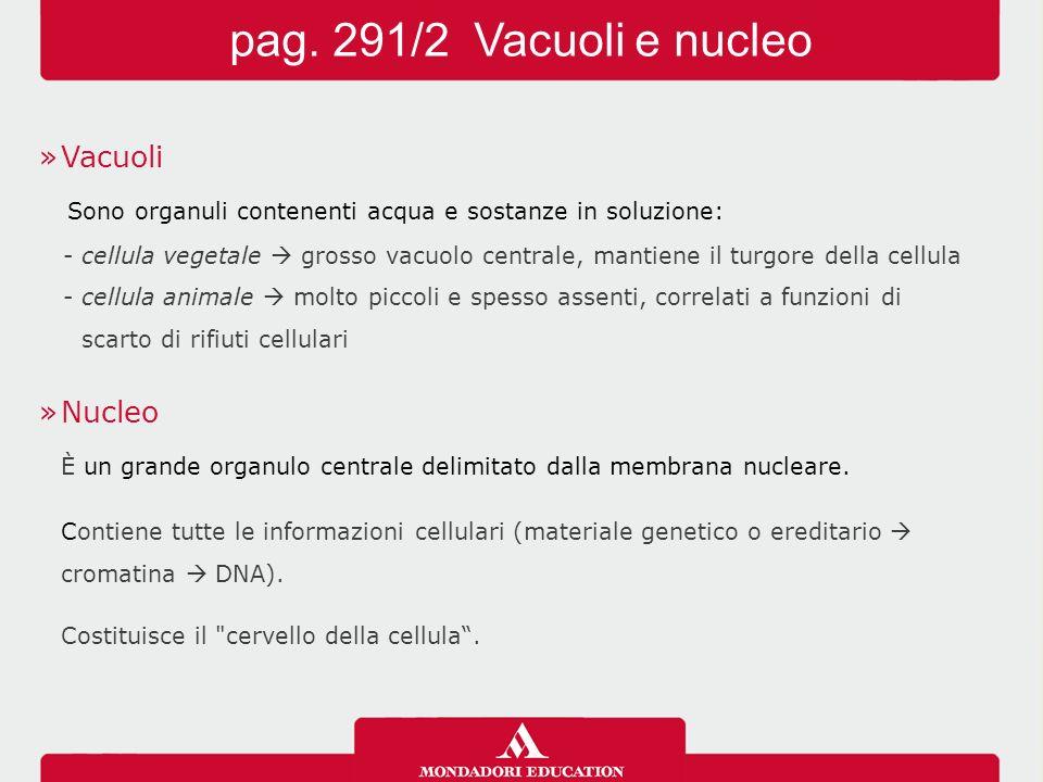 »Vacuoli Sono organuli contenenti acqua e sostanze in soluzione: -cellula vegetale  grosso vacuolo centrale, mantiene il turgore della cellula -cellu
