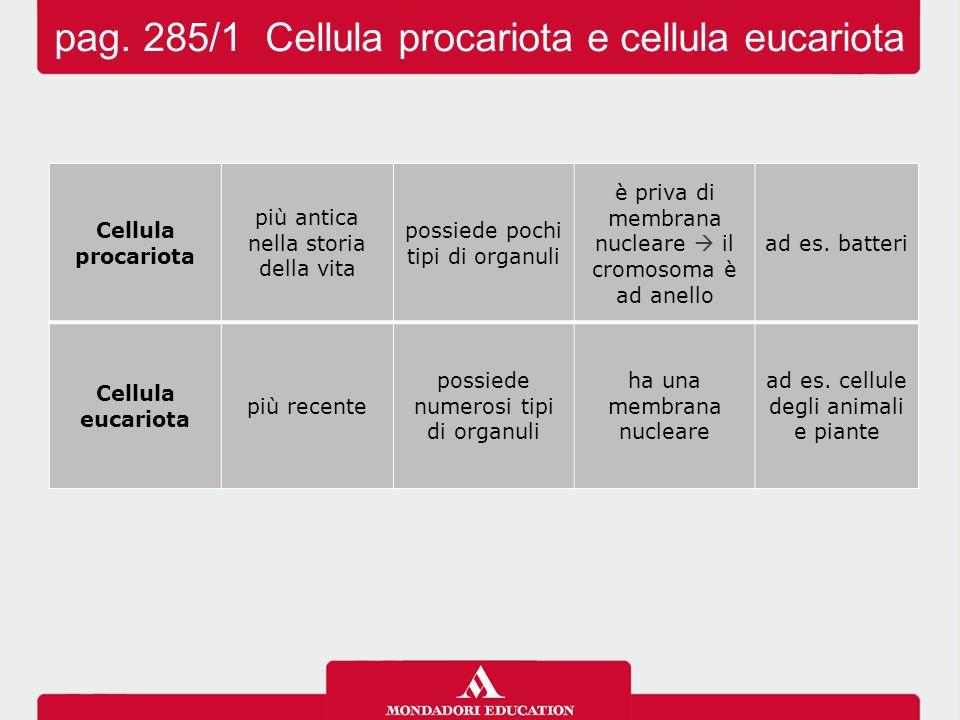 Didascalia pag. 285/2 Cellula procariota