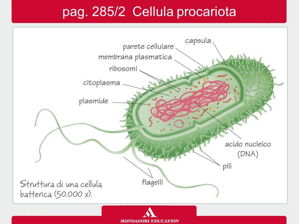 pag. 288/1 I costituenti cellulari: cellula animale