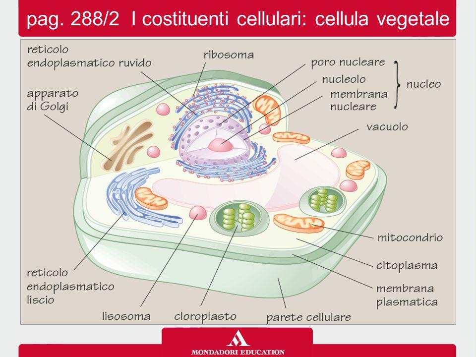 pag. 288/2 I costituenti cellulari: cellula vegetale