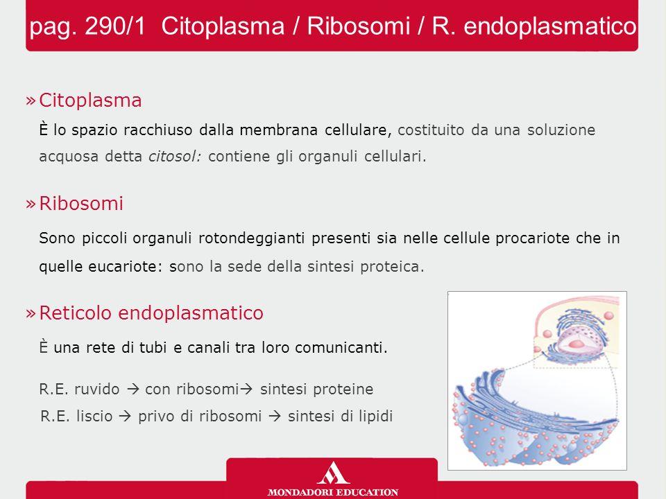 »Citoplasma È lo spazio racchiuso dalla membrana cellulare, costituito da una soluzione acquosa detta citosol: contiene gli organuli cellulari. »Ribos