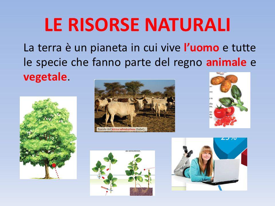 LE RISORSE NATURALI La terra è un pianeta in cui vive l'uomo e tutte le specie che fanno parte del regno animale e vegetale.