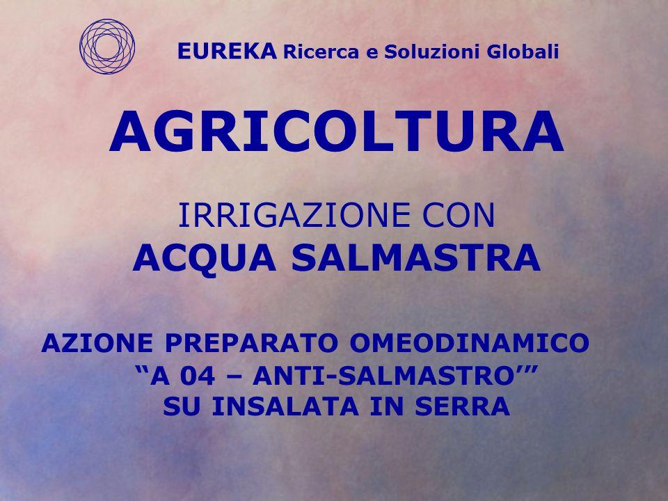 AGRICOLTURA IRRIGAZIONE CON ACQUA SALMASTRA AZIONE PREPARATO OMEODINAMICO A 04 – ANTI-SALMASTRO' SU INSALATA IN SERRA EUREKA Ricerca e Soluzioni Globali
