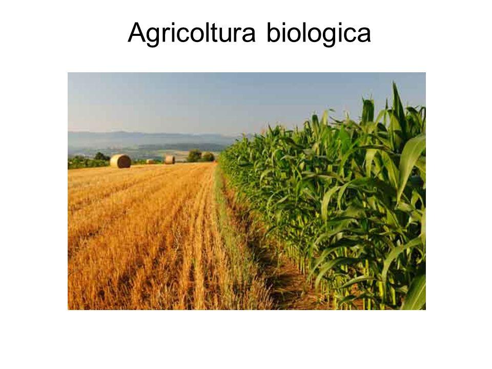 SI RIESCE AD OTTENERE UN PRODOTTO ESENTE DA SOSTANZE CHIMICHE, A BASSO IMPATTO AMBIENTALE E CON UNA BASSA PRODUZIONE DI RIFIUTI (i rifiuti organici vengono riciclati nel compostaggio o nel sovescio), SPESSO UTILIZZANDO RISORSE PRESENTI NEL TERRITORIO (Km 0)