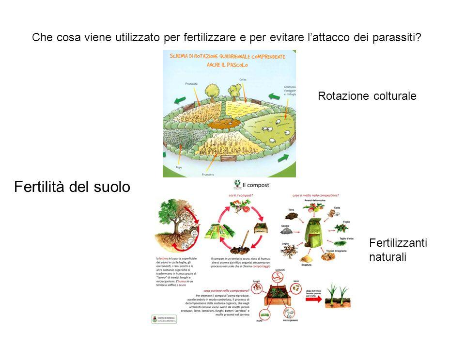 Che cosa viene utilizzato per fertilizzare e per evitare l'attacco dei parassiti? Fertilità del suolo Rotazione colturale Fertilizzanti naturali