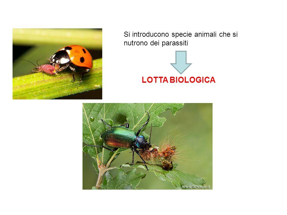 Si introducono specie animali che si nutrono dei parassiti LOTTA BIOLOGICA