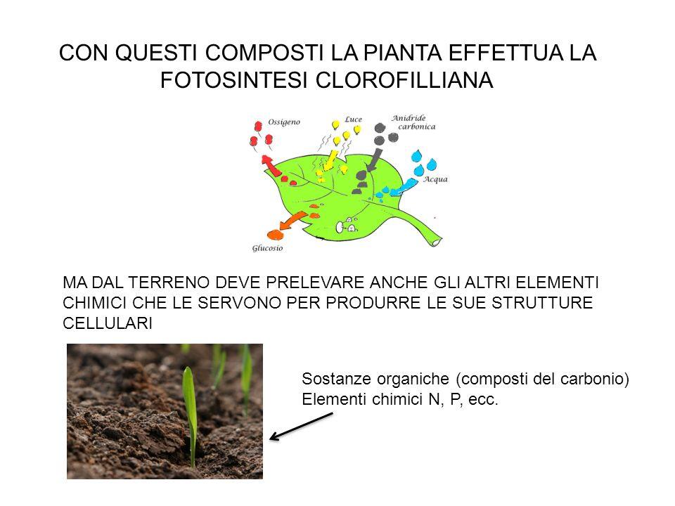 Allo scopo di rendere massima la resa delle pratiche agricole e rendere fertili anche suoli in origine non adatti alle colture sono stati sviluppati e sintetizzati composti chimici noti come FERTILIZZANTI CHIMICI