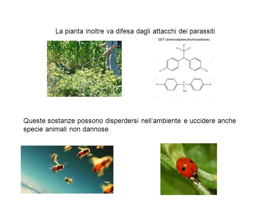 La pianta inoltre va difesa dagli attacchi dei parassiti Queste sostanze possono disperdersi nell'ambiente e uccidere anche specie animali non dannose