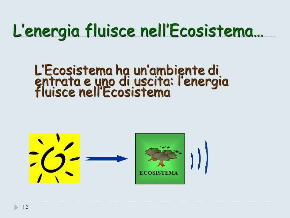 Il Sole: Fonte Di Energia 11 La fonte primaria di Energia di un Ecosistema naturale, essenziale per la vita di qualunque organismo è il Sole, la cui radiazione viene trasformata in energia chimica dalle piante, nel processo della Fotosintesi.
