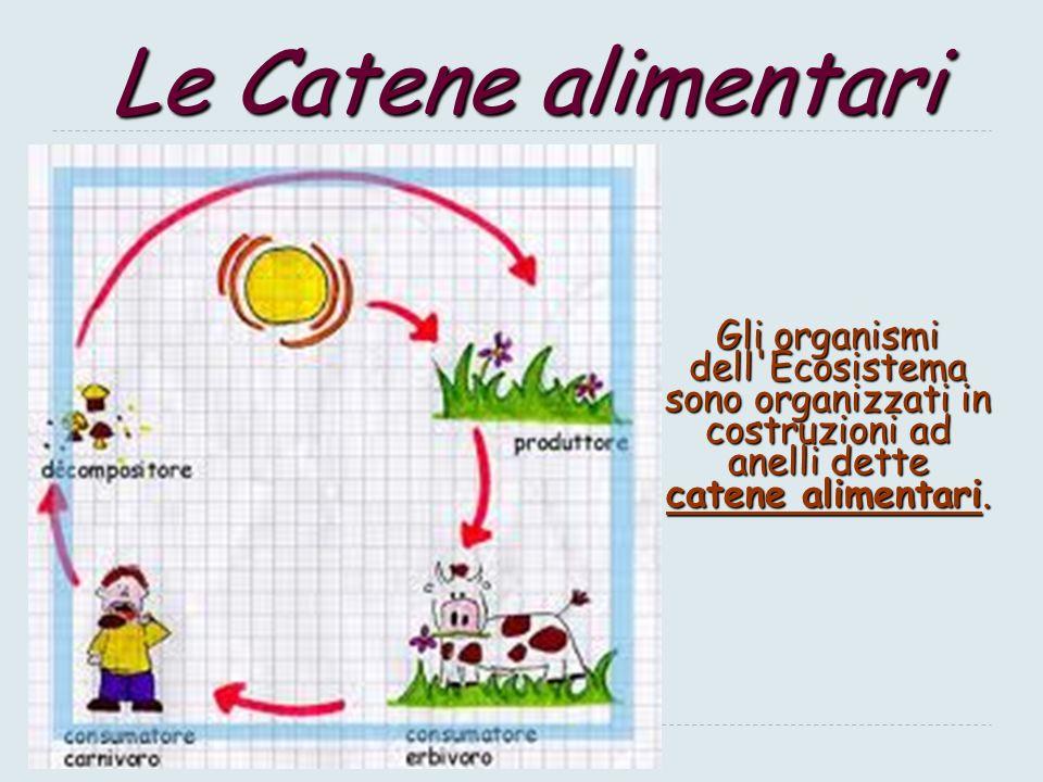 L'energia fluisce nell'Ecosistema… 12 L'Ecosistema ha un'ambiente di entrata e uno di uscita: l'energia fluisce nell'Ecosistema ECOSISTEMA