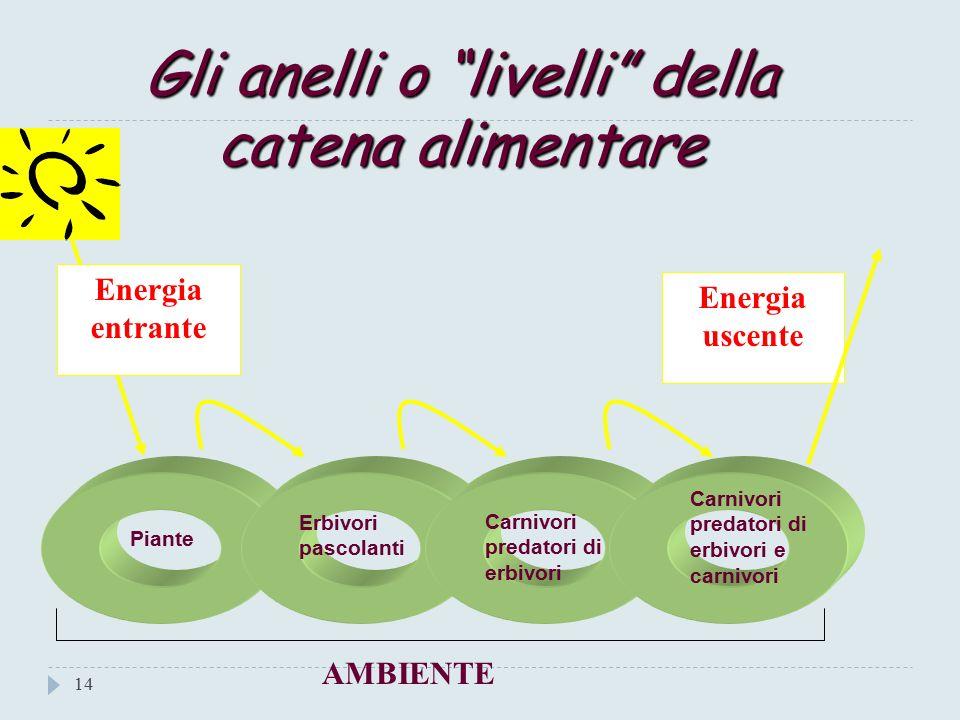 Le Catene alimentari 13 Gli organismi dell Ecosistema sono organizzati in costruzioni ad anelli dette catene alimentari.