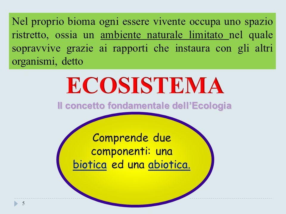4 La biosfera è suddivisa in biomi, vari ambienti che, a seconda del clima, permettono la vita a certi organismi e la negano ad altri.