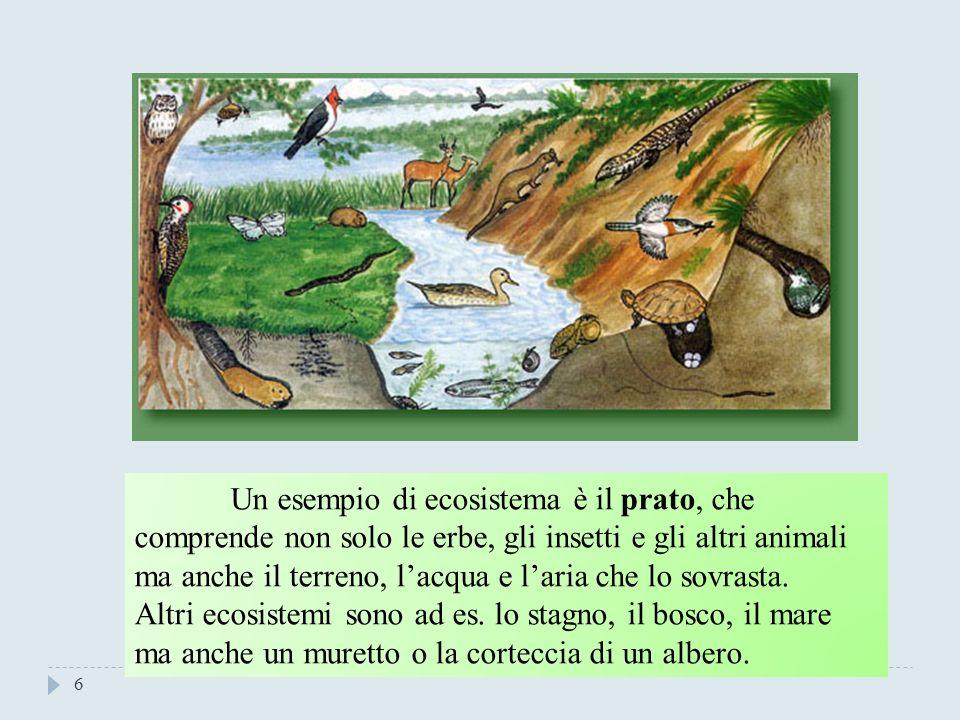 5 Il concetto fondamentale dell'Ecologia bioticaabiotica.