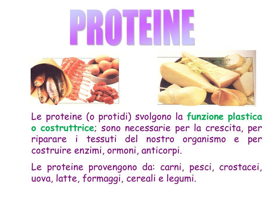 Le proteine (o protidi) svolgono la funzione plastica o costruttrice; sono necessarie per la crescita, per riparare i tessuti del nostro organismo e per costruire enzimi, ormoni, anticorpi.