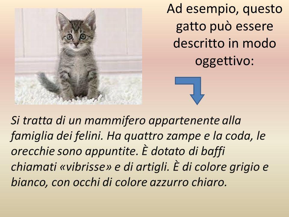 Ad esempio, questo gatto può essere descritto in modo oggettivo: Si tratta di un mammifero appartenente alla famiglia dei felini.