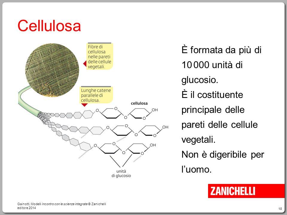 18 Cellulosa È formata da più di 10 000 unità di glucosio. È il costituente principale delle pareti delle cellule vegetali. Non è digeribile per l'uom