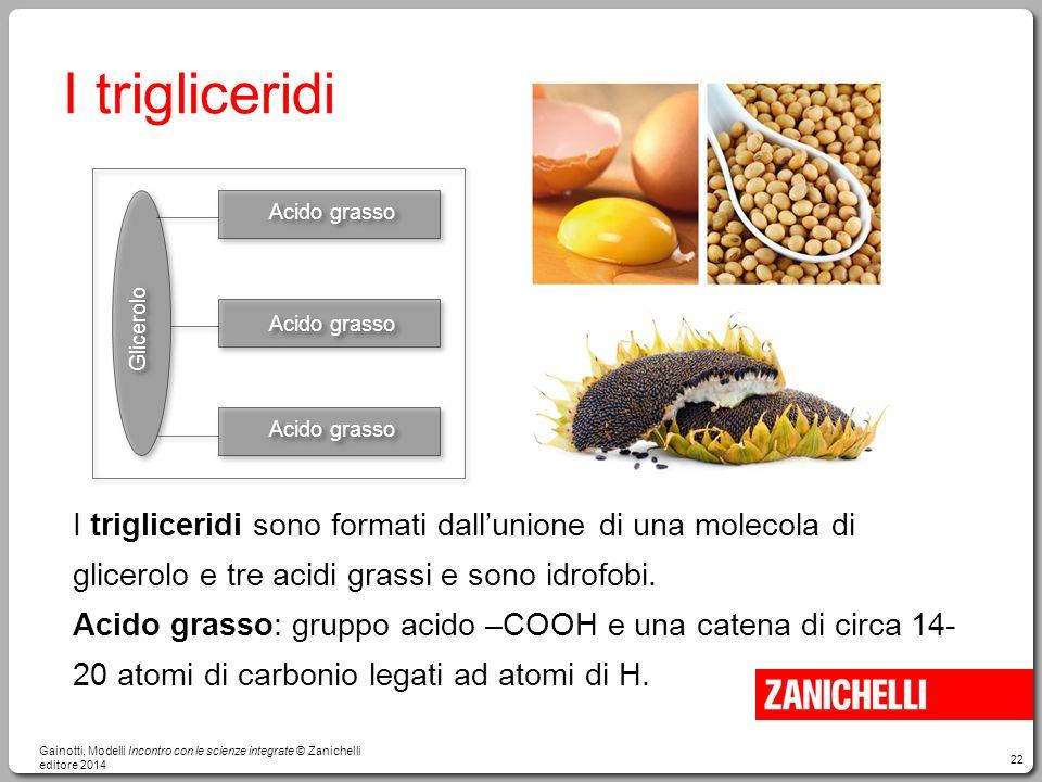 22 I trigliceridi I trigliceridi sono formati dall'unione di una molecola di glicerolo e tre acidi grassi e sono idrofobi. Acido grasso: gruppo acido