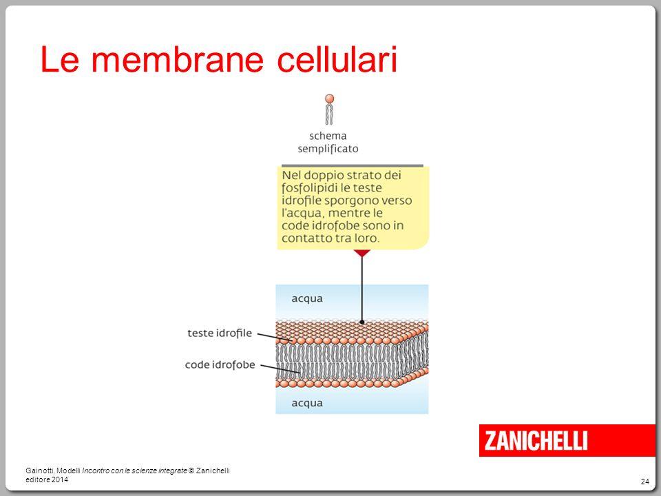 24 Le membrane cellulari Gainotti, Modelli Incontro con le scienze integrate © Zanichelli editore 2014