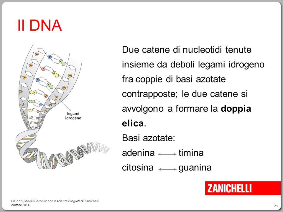 31 Il DNA Due catene di nucleotidi tenute insieme da deboli legami idrogeno fra coppie di basi azotate contrapposte; le due catene si avvolgono a form