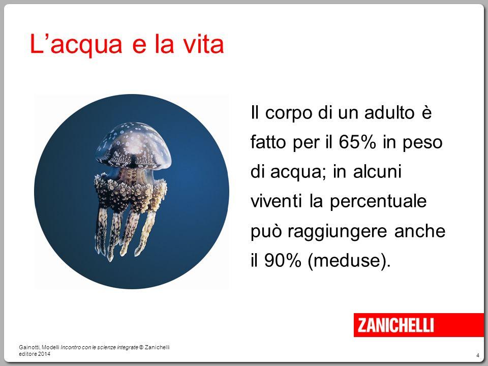 4 L'acqua e la vita Il corpo di un adulto è fatto per il 65% in peso di acqua; in alcuni viventi la percentuale può raggiungere anche il 90% (meduse).