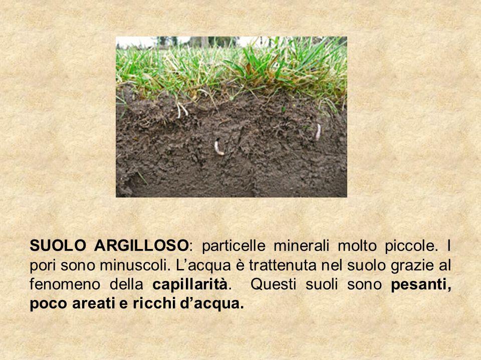 SUOLO ARGILLOSO: particelle minerali molto piccole.