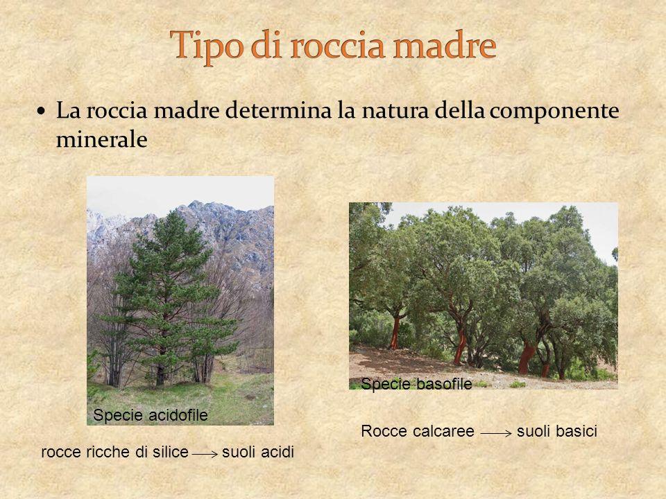 La roccia madre determina la natura della componente minerale rocce ricche di silice suoli acidi Rocce calcaree suoli basici Specie acidofile Specie basofile