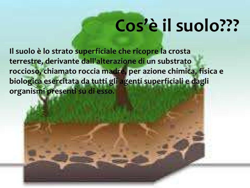 ROCCIA MADRE DISGREGAZIONE MECCANICA (acqua, vento, ghiaccio) DISGREGAZIONE MECCANICA E CHIMICA DOVUTA AD ORGANISMI (piante, lombrichi, talpe) DETRITI MINERALI DI VARIA DIMENSIONE (sabbia, argilla) COLONIZZAZIONE DEGLI ORGANISMI PIONIERI (licheni, muschi, funghi, invertebrati ecc.) FORMAZIONE DI HUMUS (sostanza organica derivante da resti animali e vegetali decomposti dai batteri) SUOLO : miscuglio di minerali, humus e organismi viventi