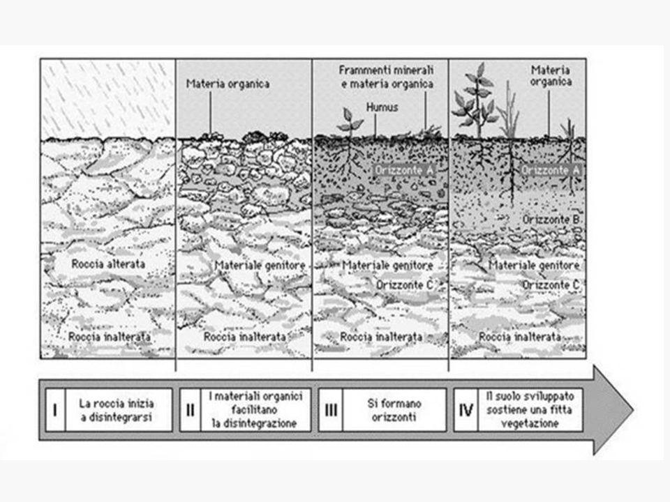 Se la pendenza è elevata i detriti rotolano verso valle per la forza di gravità e perché trascinati dall'acqua Monte Sumbra