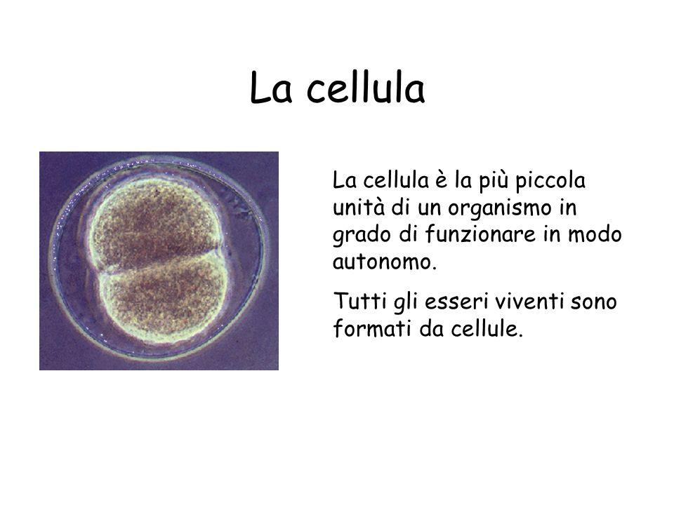 La cellula è la più piccola unità di un organismo in grado di funzionare in modo autonomo. Tutti gli esseri viventi sono formati da cellule.